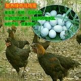 乌鸡蛋30枚/箱